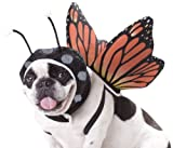 butterfly dog costume with wings and antennae
