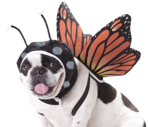 Dogma Bartleby Costumes - California Costumes Butterfly Dog Costumes, Pet,