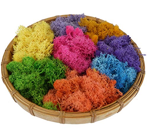 Bister 6.5oz Reindeer Moss Preserved 5 Assorted Colors for Fairy Gardens, Gift Packing, Dressing Potted Plants and More Crafts