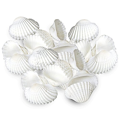 20 Pristine White Natural Aquarium Seashells - Provides Calcium, Increases pH in Saltwater Tanks - 100% Pet-Safe & Non-Toxic - Home Decor, Create Beach Vibe at Home - Ideal for Turtle, Guppy, Molly