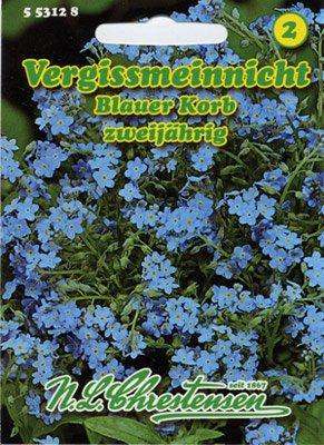 Vergißmeinnicht Blauer Korb Myosotis sylvatica