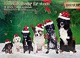 Alfavet Adventskalender 2021 für Hunde, 24 natürliche Snacks, Weihnachtskalender getreidefrei ohne Zusatzstoffe