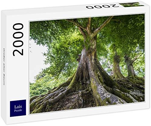 Lais Puzzle Un Gran árbol Viejo 2000 Piezas