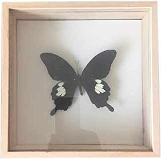昆虫植物標本箱桐木材クリエイティブモダン装飾的なフレームDIYドライフラワー蝶美容アートワークギフトデコレーションアーティスト維持自然