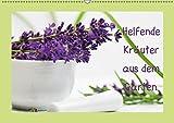 Helfende Kräuter aus dem Garten Schweizer KalendariumCH-Version (Wandkalender 2019 DIN A2 quer): Sommerkräuter die helfende und heilende Wirkung haben ... 14 Seiten ) (CALVENDO Gesundheit)