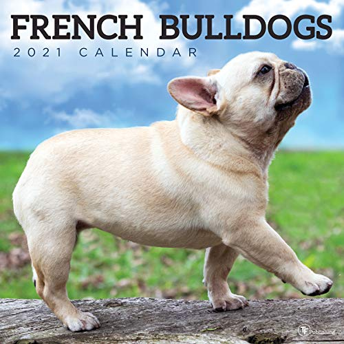 TF PUBLISHING 2021 French Bulldogs Monthly Wall Calendar - Photographs - Planner with Contacts and Notes Space - Enhance Home or Office Planning and Organization - Premium Gloss Paper 12'x12'