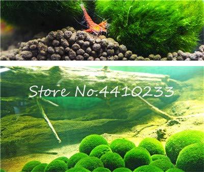 Bloom Green Co. 200 Stück Diy Fisch-Behälter im Wasser Bonsai Anlage für Aquarium Moss Für Hausgarten Einfach Wasser Pflanzen wachsen hoch Keimung: e