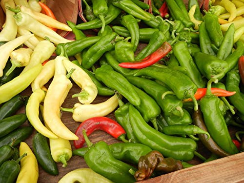 Asklepios-seeds® - 15 Samen chili anaheim