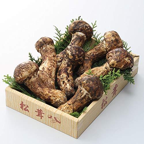 松茸 まつたけ 国産松茸 日本産 産地厳選 秀品 つぼみ〜ひらき 大きさお任せ 約500g