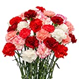 FlowerPrime Valentine's Day Carnations - Special Holiday Variety Pack Fresh Natural Cut Flowers (50)