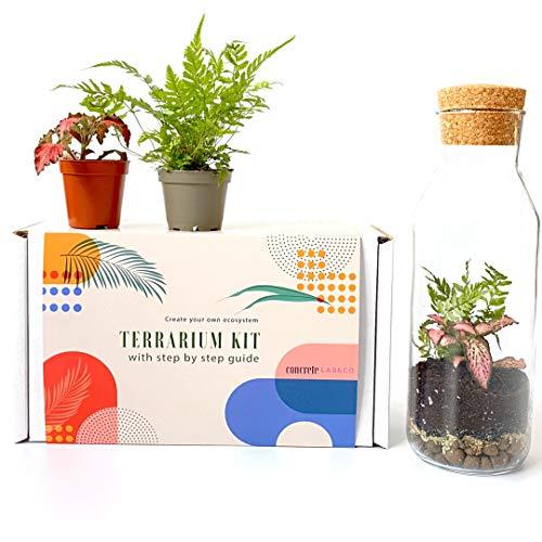 Terrarium Kit mit Glasbehälter & Korkdeckel Mini Garten Geschenkidee DIY Kit (Komplettset mit Werkzeug, Fern, Fittonia)