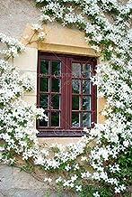 50pcs Bag Rare Climbing Jasmine Flower Seeds White Jasmine Seeds Fragrant Plant