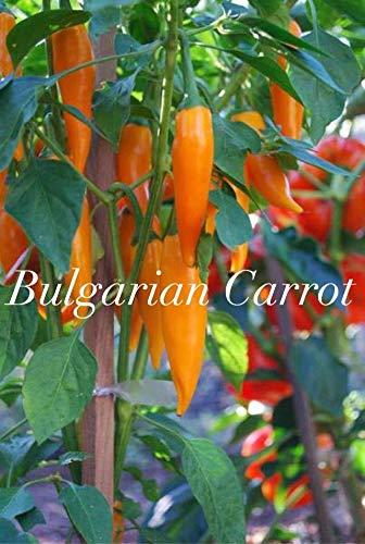 Portal Cool Hot Chilli Pepper - Bulgarian Carrot - 10 Samen
