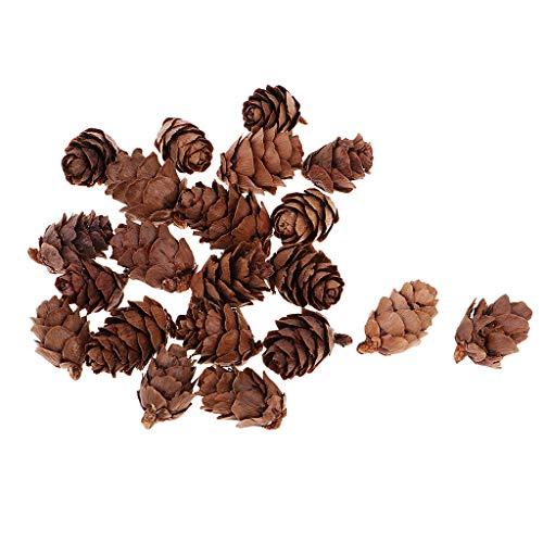 Fenteer 50 Stück Kleine Sortierte Pine Cones Echte Kleine Tannenzapfen Schwarzkiefer Zapfen Kiefernzapfen für Geburtstag, Weihnachtstag deko
