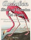 Audubon Birds of America Art Prints: 24 Cutout Ready to Frame Vintage Bird Illustration Prints for Wall Decor