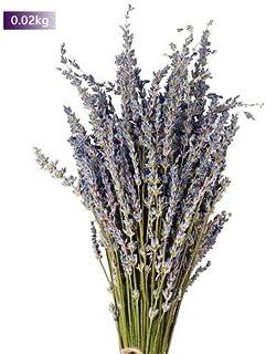 Wovemster Flores Preservadas De La Lavanda Eterna Manojos