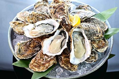 北海道 「サロマ湖 播摩かき」 約2㎏ (15個-20個)牡蠣 大粒 特秀品 化粧箱 御年賀 ギフト 贈答品 お正月は毎日出荷