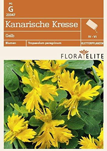 Flora Elite 23347 Kanarische Kresse Gelb (Kressesamen)