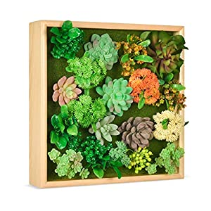 Silk Flower Arrangements HomeLifairy Artificial Succulent Plants Wall Decor Art for Home Decor Indoor with Pine Frame Hanging Living Room Kitchen Wall Decor,12x12 inch