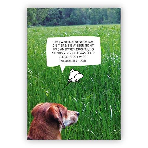 In 5-delige set leuke foto spreukkaart met hond en vogel: om twee benijd ik de dieren: ze weten niet wat er aan boze dreigt, en ze weten niet wat er over ze geredd wordt. Voltaire (1694-1778)