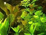 30 Aquariumpflanzen & Dünger für 3000 Liter