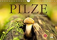 Pilze - fleissige Waldarbeiter (Wandkalender 2022 DIN A4 quer): Sie heissen Satan, Schweinsohr, Fliegen oder Knollenblaetter: Pilze. (Monatskalender, 14 Seiten )