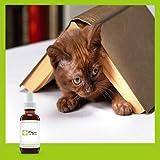 Fleurs de Bach Chat stressé un mélange qui va aider votre chat à se calmer Flacon de 10 ML