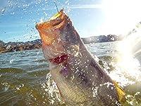 Sight fishing with Seth Furmanek at Saguaro lake