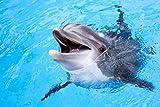 Delfine Wasser Tier XXL Wandbild Kunstdruck Foto Poster
