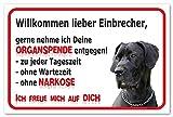 AdriLeo Schild - Vorsicht Deutsche Dogge - Willkommen Lieber Einbrecher - (20x30cm) / Graues Fell Achtung Hund Wachhund