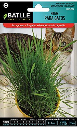 Semillas Aromáticas - Hierba para gatos - Batlle ✅