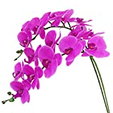 Htmeing 38 Inch Artificial Phalaenopsis Flowers Branches Real Touch (Not Silk) Orchids Flowers for Home Office Wedding Decoration,Pack of 2 (Rose red)