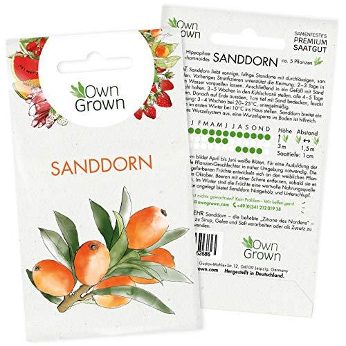 Sanddorn Samen: Premium Sanddorn Saatgut für 5 Sanddorn Pflanzen – Sanddorn Beeren Samen zur Aussaat der Sanddorn Pflanze im Garten – Samen Obst, Samen exotisch, Obst Pflanzen Winterhart von OwnGrown