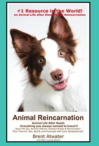Animal Reincarnation & Animal Life After Death - Answers Your Heart's Questions re Pet Loss, Afterlife, After-death Communication