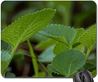 Mouse Pad - Indian Borage Ajwain Ayurveda Plant Green Nature
