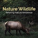 Nature Wildlife