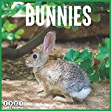 Bunnies: 2021 Wall & Office Calendar, 12 Month Calendar