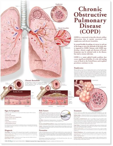 Chronic Obstructive Pulmonary Disease (Copd) Anatomical Chart