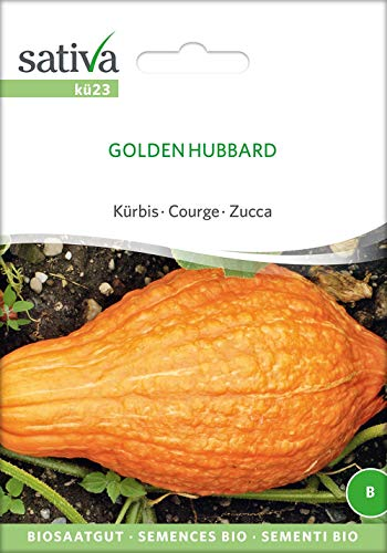 Sativa Rheinau kü23 Kürbis Golden Hubbard (Bio-Kürbissamen)