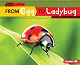 From Egg to Ladybug (Start to Finish, Second Series) (English Edition)