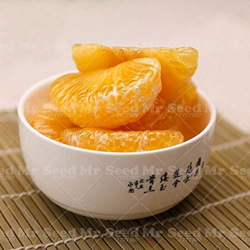 SANHOC 20pcs Pomelo Citrus Bonsai Pflanze orange Fruchtpflanzen Grapefruit Seltene Frucht für Hausgarten-DIY Pflanz Bonsai: 2