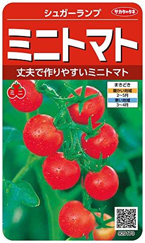 サカタのタネ 実咲野菜0170 ミニトマト シュガーランプ 00920170