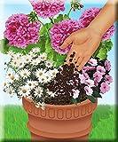 Compo Sana Qualitäts-Blumenerde, 5 L - 5