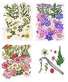 Flores Prensadas,Flores Prensadas Secas Reales Flores Prensadas para Resina,Flores Prensadas Pequeñas,Flores Prensadas Manualidades,Juego de Flores Secas