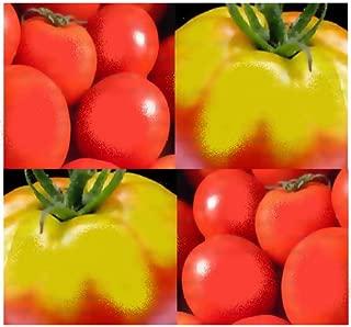 Best thessaloniki tomato seeds Reviews