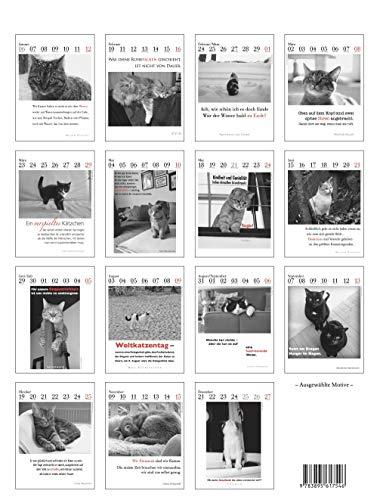 Der literarische Katzenkalender 2020 - 2