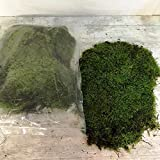 Caja Musgo Natural (4 capas) PORTES GRATIS