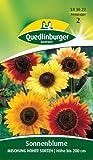 Sonnenblume, Mischung hoher Sorten