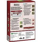 Zoom IMG-1 kb sementi evergreen ripara rinsemina