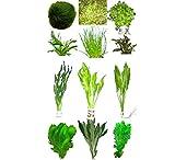 10 Bunde ca. 60 Pflanzen + Javamoos, Mooskugeln, Dünger, Aufbereiter...